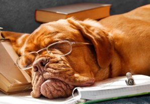 Book writing process have you dog tired?
